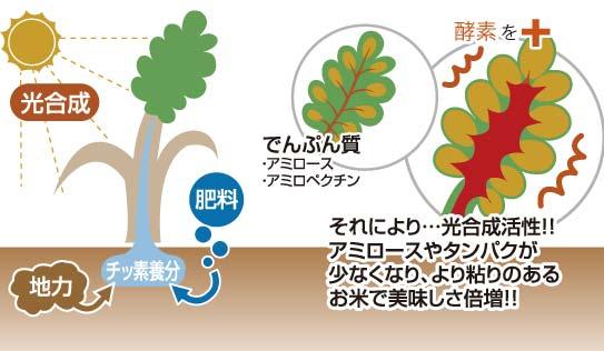 酵素栽培イメージ図